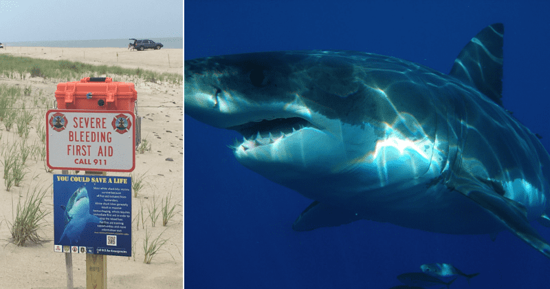 SHARK SEASON IS OFFICIAL: 4th of July warning as 3 great white sharks spotted in one day off Cape Cod