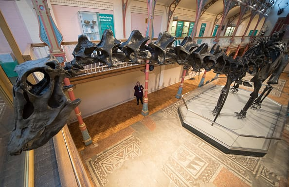 Dippy the dinosaur from the National History Museum. (Photo by Matt Cardy/Getty Images)
