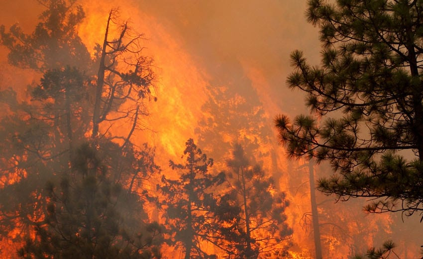 The teenager was sentenced to five years of probation in February in addition to 1,920 hours of community service with the U.S. Forest Service. (Getty Images)