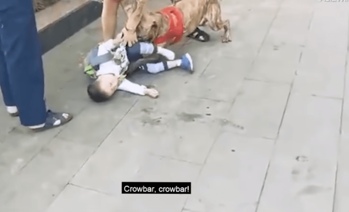 The dog caught hold of the boy's leg and refused to let go. (Youtube)