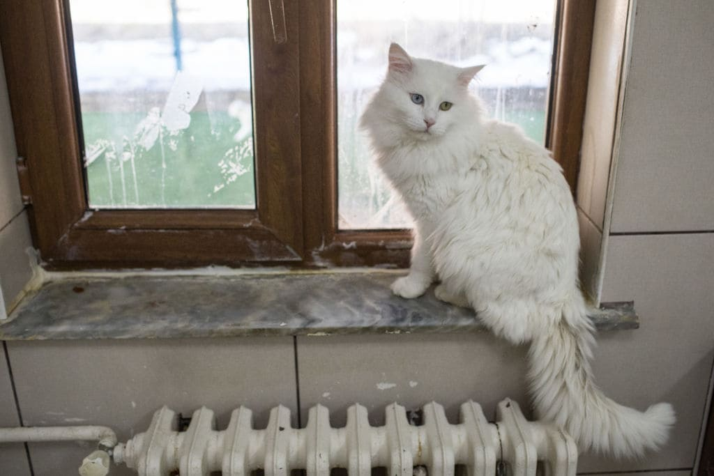 The cat had reportedly gone missing for days before the incident occurred. (Getty Images)