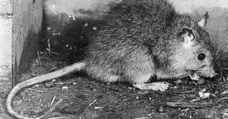 Idaho youth first person to contract bubonic plague in ...