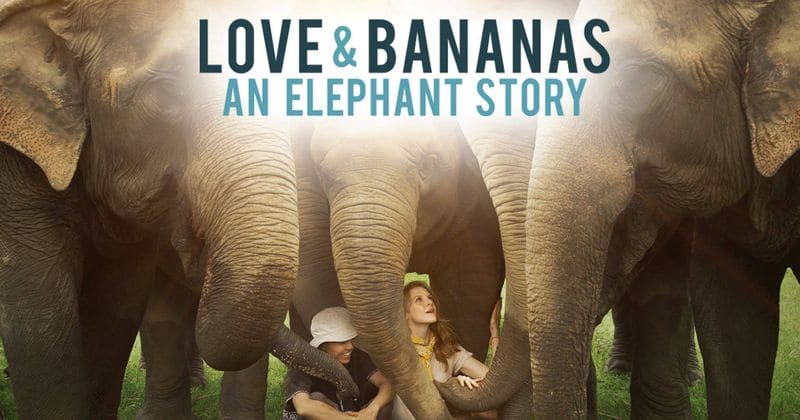 'Love & Bananas: An Elephant story' set to premiere on Starz