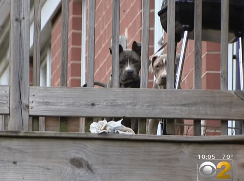 The argument was over two puppies peeing on the porch of his Southshore home, Payne said. (Screenshot)
