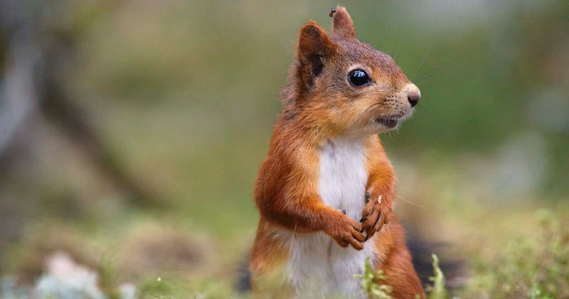 Horrified Man Calls Cops After Being Chased By Baby Squirrel Looking For A New Mother Meaww