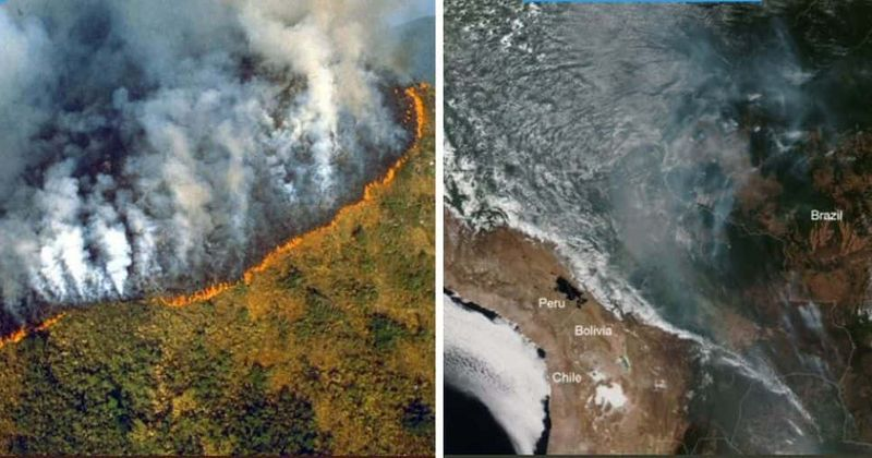 Image result for amazon rainforest fire
