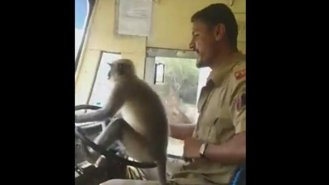 According to witnesses, the monkey boarded the vehicle with another passenger but refused to sit anywhere but up front (YouTube)