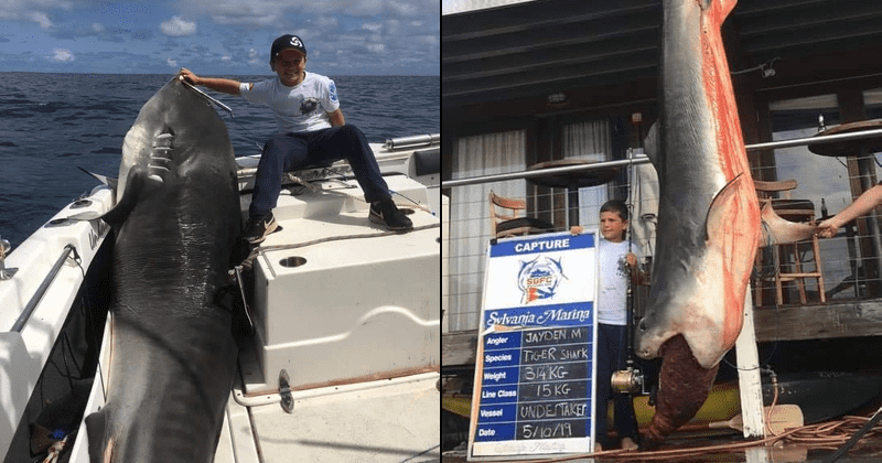 Boy, 8, reels in record-breaking 700-pound tiger shark while out fishing with his dad