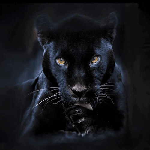 Choose One Animal And We Will Reveal The Darkest Aspect Of Your Personality 5