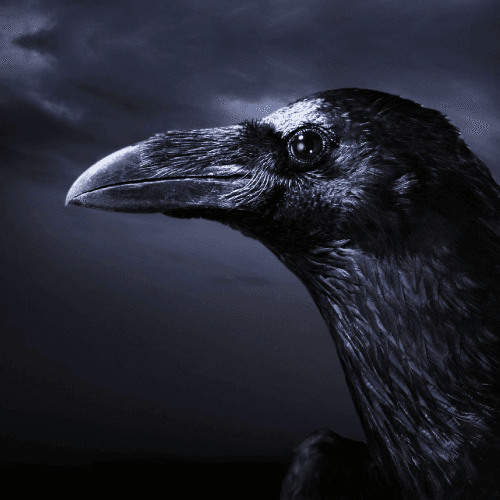 Choose One Animal And We Will Reveal The Darkest Aspect Of Your Personality 4