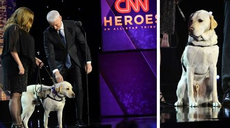 George HW Bush's service dog Sully walks the red carpet at CNN gala, becomes its most popular guest
