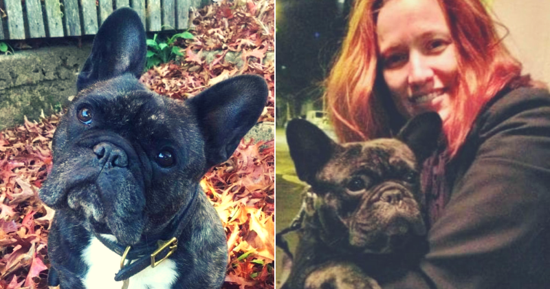 French Bulldog dies from heat stroke after Virgin Airlines