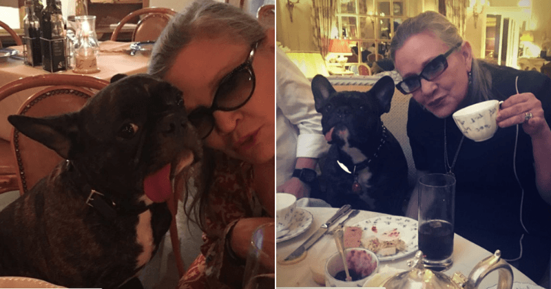 'The new adventure begins': Carrie Fisher's French bulldog Gary retires to Florida, two years after the actress' death
