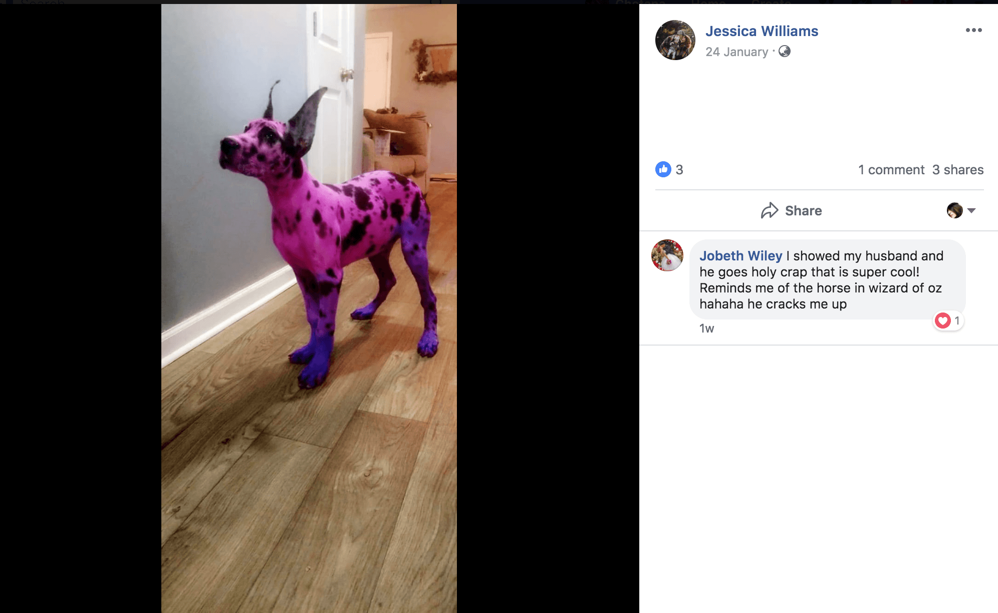 Dog owner dyes her Great Dane pink to make her look less