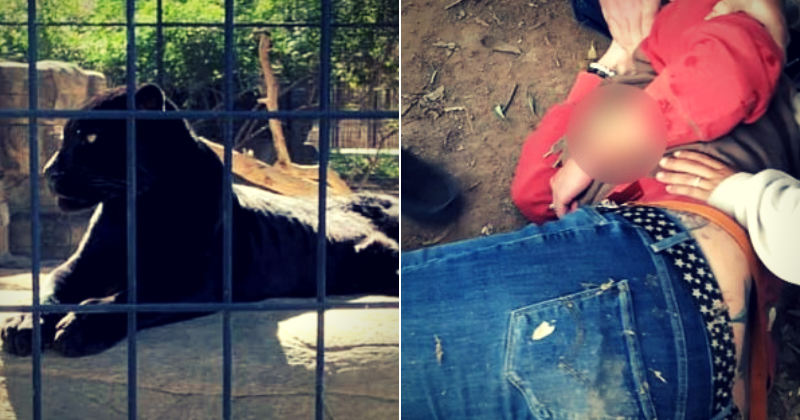 Woman severely mauled by jaguar after she crosses the zoo