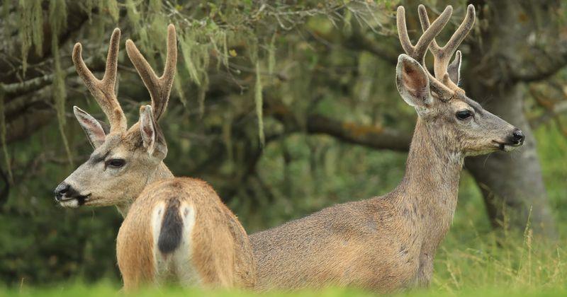 Image result for teens pennsylvania deer