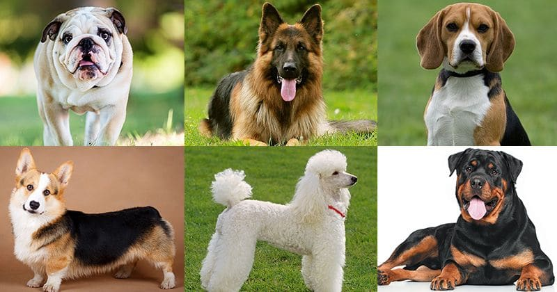 What does the breed of your dog say about the kind of person you are?