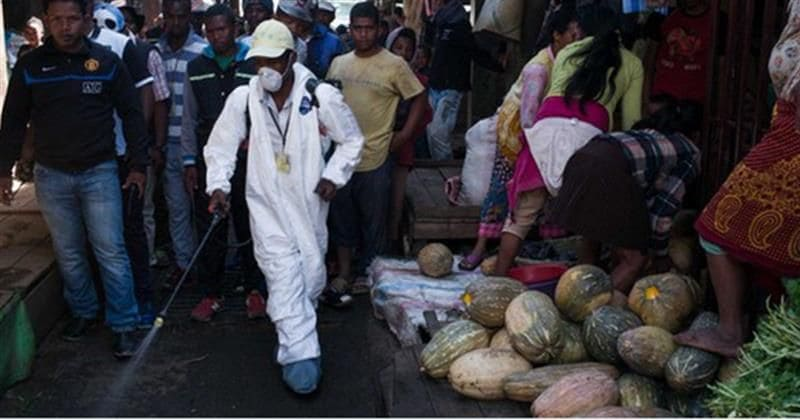 Madagascar's deadly pneumonic plague is waiting to break out of Africa, warn experts