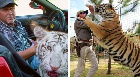 tiger zoophilia Spooning with Tigers   Michelle & Jed