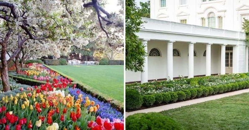 Rose Garden Row Internet Turns To Biden For Help As Melania Rips Up Jackie Kennedy S Oasis Of Color Meaww