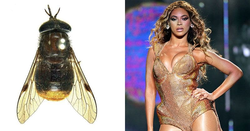 From Beyonce's horse fly to the Khaleesi slug: 10 weird creatures that are named after pop-culture icons