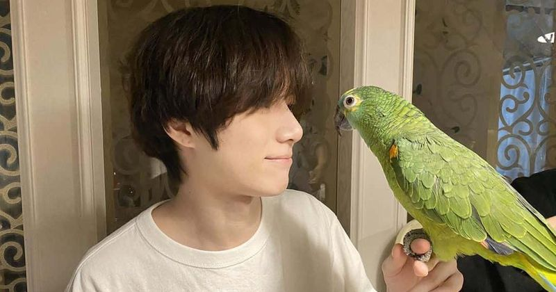 Image result for beomgyu toto
