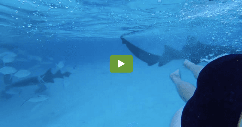 Man inadvertently films shark biting wife on their honeymoon